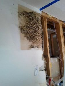 water-damage-restoration-caused-mold-growth