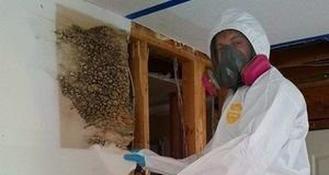 Mold Infestation Discovered Inside Drywall